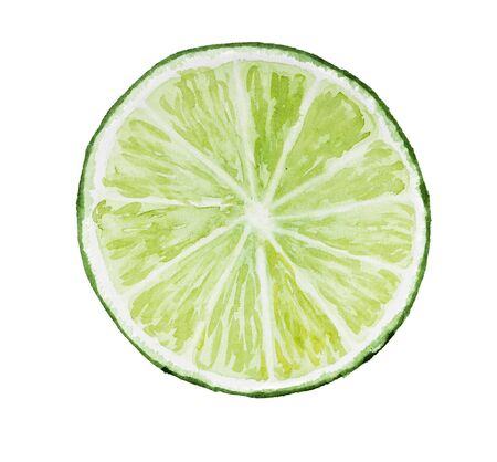 citric: Lime isolated on white background. Watercolor illustration. Drawn by hand.