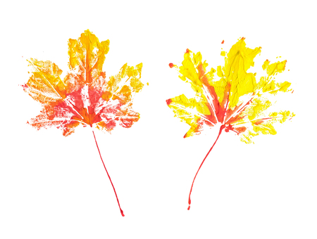 Two autumn maple leaves imprint watercolor isolated on white background
