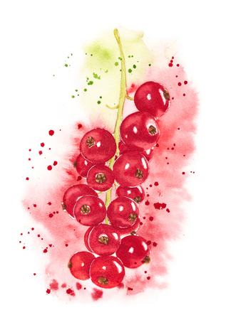 red currant: Red currant isolated on white background. Watercolor hand painting illustration. Stock Photo