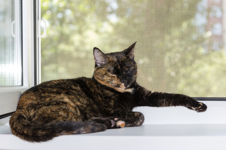 open windows: Domestic cat tortoiseshell color sleeps on windowsill on summer day.