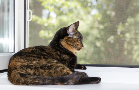 Domestic cat tortoiseshell color lies on windowsill on summer day. Zdjęcie Seryjne