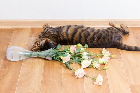 Cat breed toyger dropped glass vase of flowers on floor. Reklamní fotografie