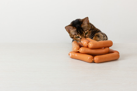 Domestic cat breed toyger steals sausage on table