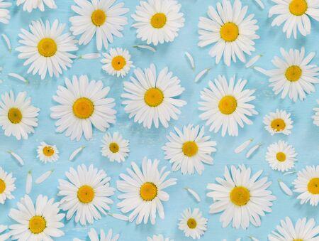 Modello senza cuciture con fiori di camomilla su sfondo azzurro. Vista dall'alto.