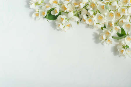 Composition of flowers and leaves of jasmine on a light background. 写真素材