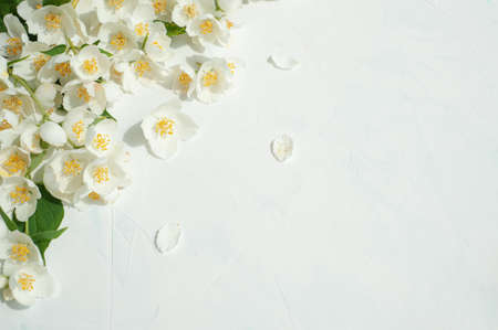 Composition of jasmine flowers on a light concrete background.