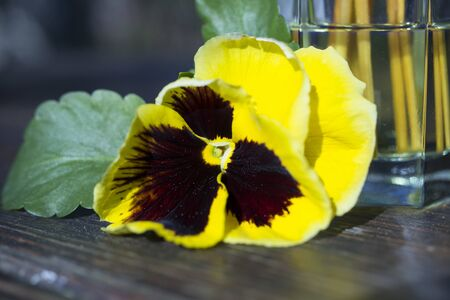 Yellow viola with flavoring and sticks.