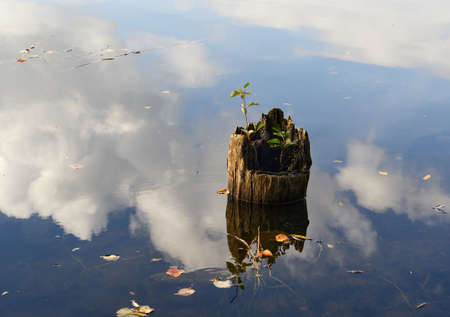 stump with sprouts on a cloud