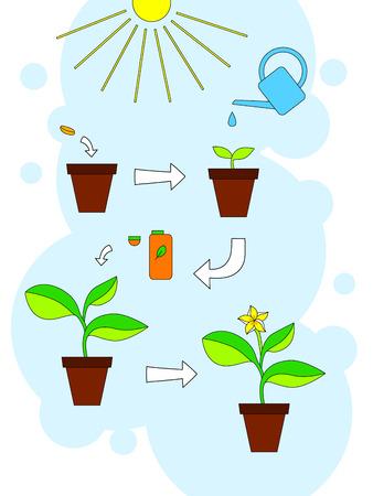 pflanze wachstum: Haus Pflanzenwachstum und Wartungstipps Infografiken, Vektor-Illustration Illustration