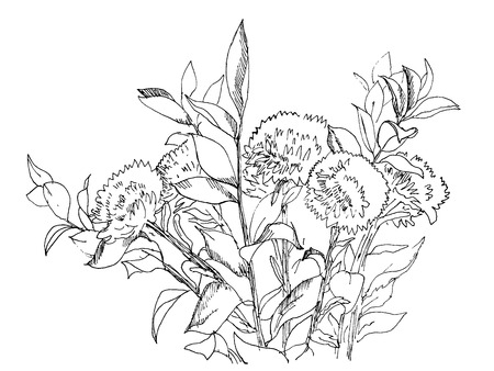 aster: Aster flowers bouquet hand drawn ink sketch, vector Illustration