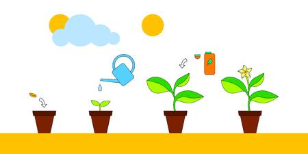 crecimiento planta: crecimiento de las plantas casa y el cuidado de la infografía de asesoramiento