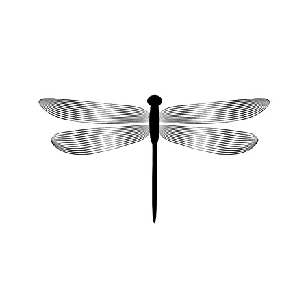 Black and white elegant dragonfly insect, vector Vectores