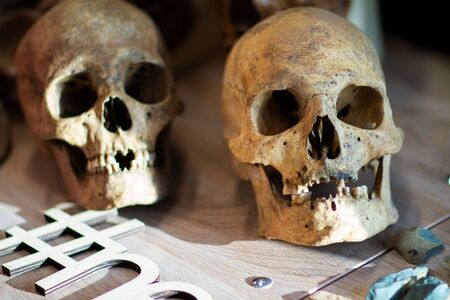 Two ancient human skulls on the table, homo sapiens bones, archeology and paleontology science educational objects