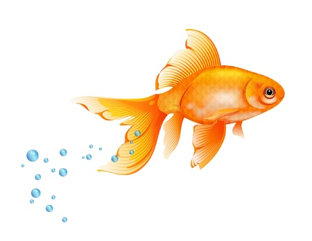Orange Goldfish with bubbles of air