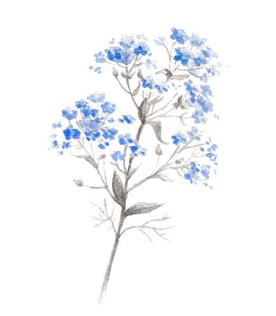 Aquarel tak van blauwe vergeet-mij-flower Stockfoto - 40057906