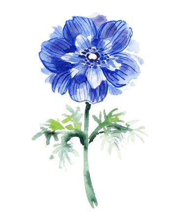 anemone: Blue watercolor anemone .  Beautiful flower