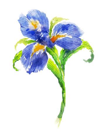 青い水彩アイリスの花  イラスト・ベクター素材