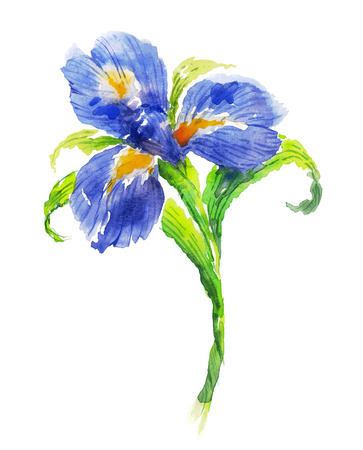 Blue watercolor iris flower