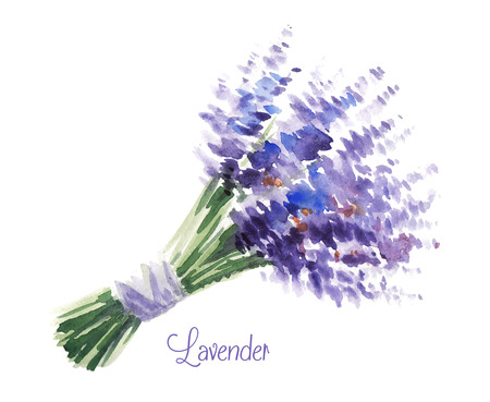 blossoms: Vector watercolor bouquet of lavender.