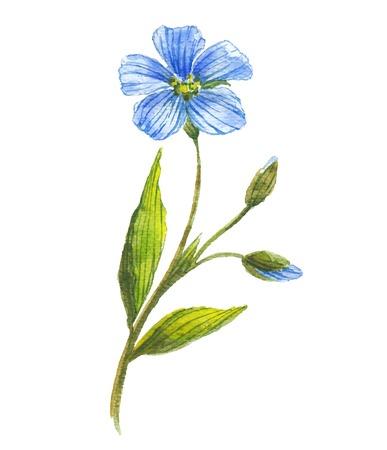 Blue flower of flax  イラスト・ベクター素材