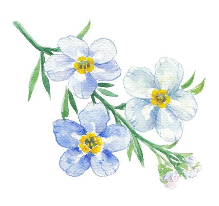 Branch of blue forget-me-not