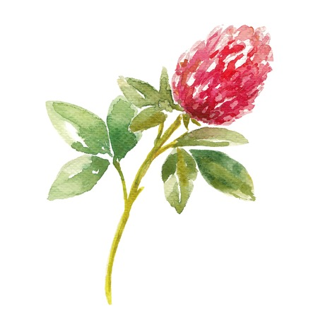 red clover: Red watercolor clover field