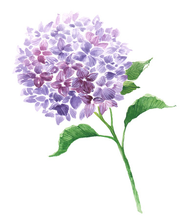 Branch of violet hydrangea 向量圖像