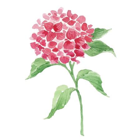 Tak van rode hortensia Stock Illustratie