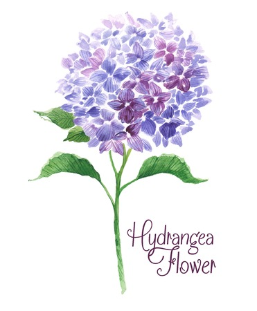 Branch of blue hydrangea. Template of greeting card. Watercolor floral illustration. Illustration