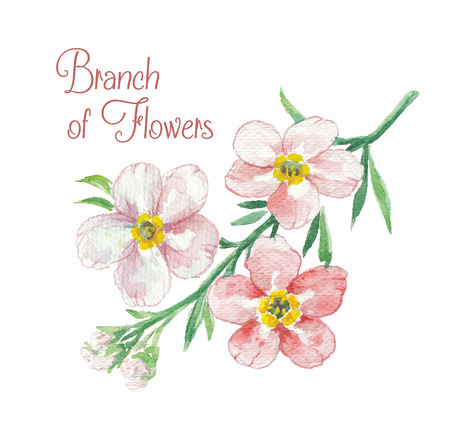 apple blossom: Branch of apple blossom. Template of greeting card. Watercolor floral illustration. Illustration