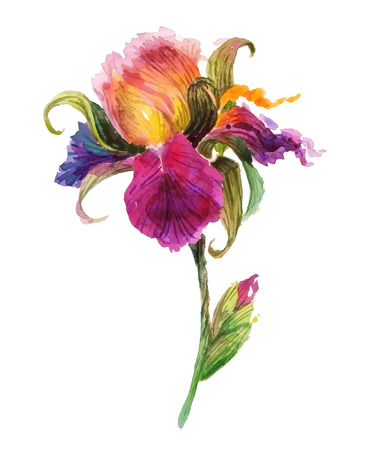 Beautiful watercolor iris flower. Watercolor floral illustration. Vettoriali