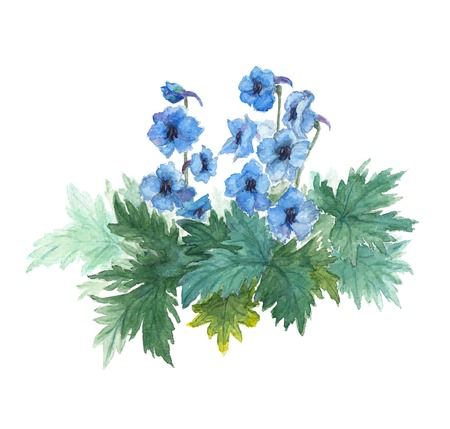 Bush blue anemones. Watercolor vector illustration