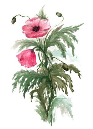 botanical garden: Bouquet of red poppies. Watercolor illustration on white background