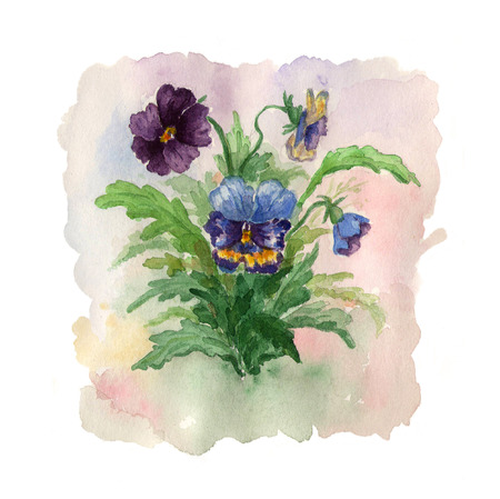 pansies: Summer bouquet of flowers pansies. Illustration for greeting card. Stock Photo