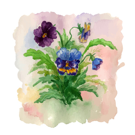 pansies: Summer bouquet of flowers pansies. Illustration for greeting card. Illustration