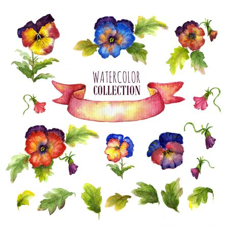 Watercolor floral collection with multicolored pansies. There are flowers, leaves, buds, satin ribbon