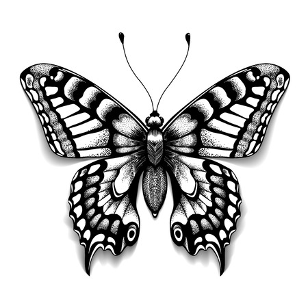 Tattoo art butterfly for design and decoration. Realistic butterfly with shadow. Vector sketch of butterfly.