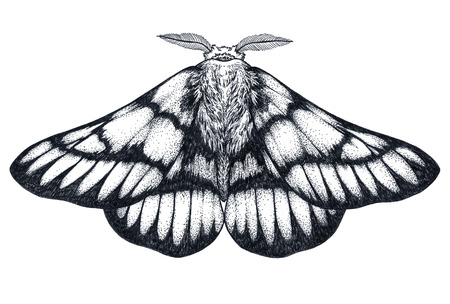 Hand drawn butterfly tattoo. Dotwork tattoo. Hemileuca griffini. Griffins sheepmoth or Canadian fleabane moth.