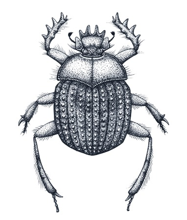 Sacred bug of scarabs tattoo art. Dot work tattoo. Insect. Symbol of eternal life, resurrection, revival
