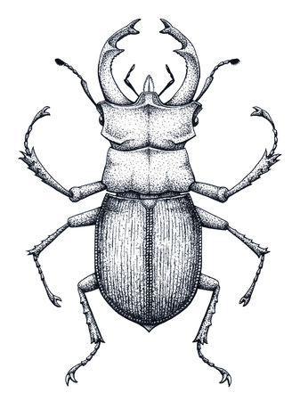 Stag bug tattoo art. Lucanus cervus. Dot work tattoo. Insect. Symbol of authority, strength, power and nobility. Ilustrace