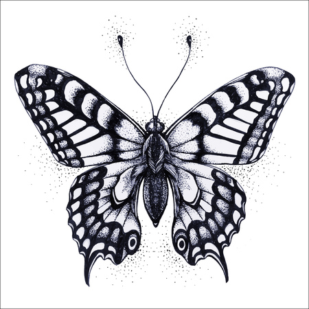 Butterfly illustration. Vector tattoo butterfly. Symbol of soul, immortality, rebirth and resurrection.