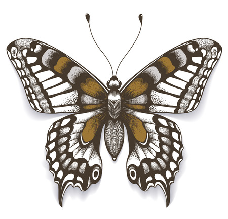 Tropica butterfly with shadow on isolated white background. Realistic illustration. Tattoo butterfly . Ilustração