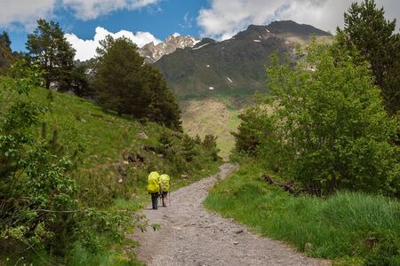 Two traveler with yellow backpacks and trekking poles goes up mountain road to forest. Sunny day Stockfoto - 130673892