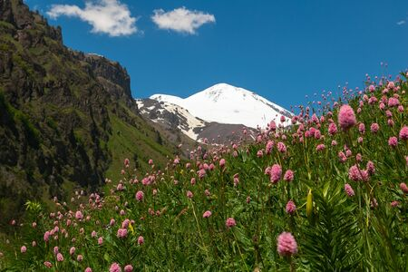 Landscape with meadow of pink flowers in foreground and Mount Elbrus in background. View of Mount Elbrus from south Stockfoto - 128153762