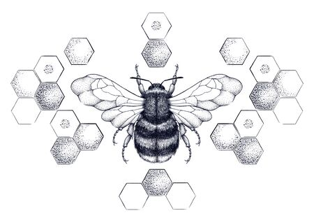Honey bee surrounded by pattern of honeycombs Stockfoto - 131969624