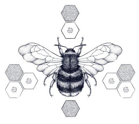 Striped honey bee sits on honeycombs. Tattoo.T-shirt illustartion