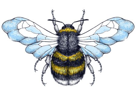 Honey bee tattoo. Dotwork tattoo. Symbol of diligence