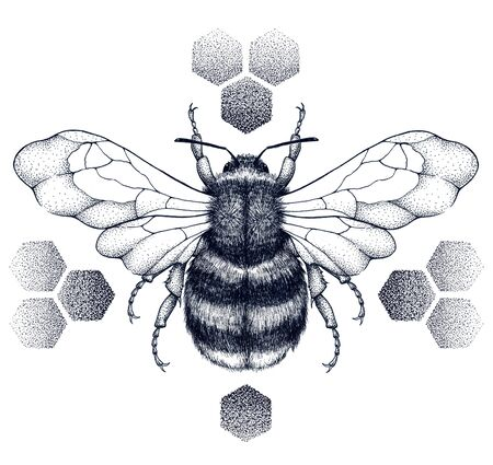 Striped honey bee sits on honeycombs. Tattoo.T-shirt illustration