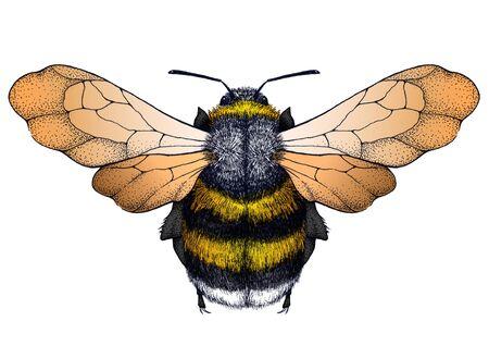 Bee tattoo. Dotwork tattoo. Symbol of diligence