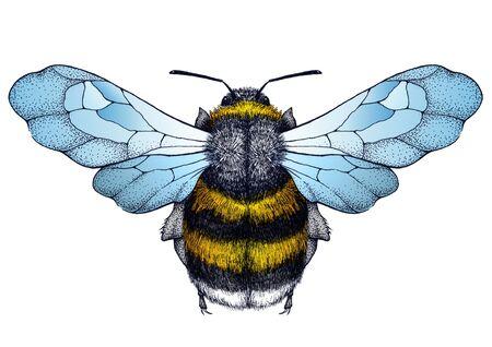 Honey bee tattoo. Dot-work tattoo. Symbol of diligence